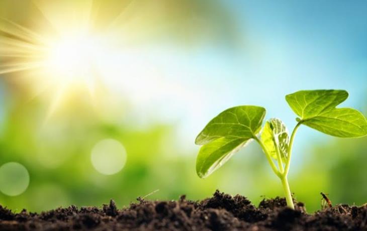 Βιονικό φύλλο μετατρέπει το φως του ήλιου σε «καθαρά» υγρά καύσιμα!